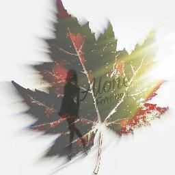 create effect clipart leaf zoomburst