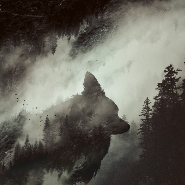 Become one with nature.  #doubleexposure #dog #silhouette #forest #edited #surreal #surrealism  op: unsplash.com