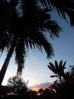 silhouette palm photography