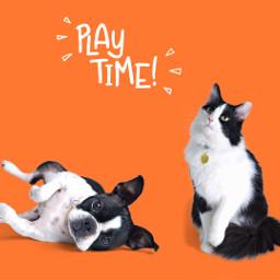 freetoedit remixit interesting pets dog
