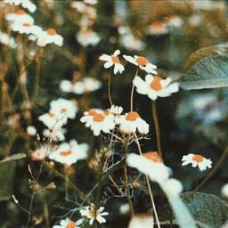 flowers nature dounleexposure makro analog freetoedit