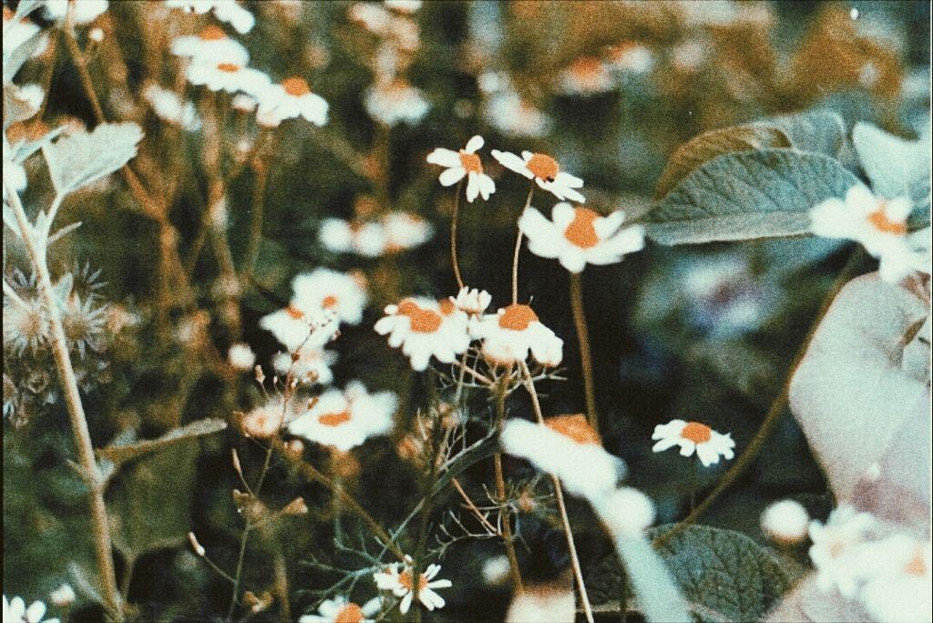 instagram: xxleaaa_k #flowers #nature #dounleexposure #makro #analog #green #butterflower #photography  #FreeToEdit