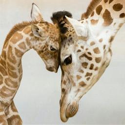 giraffe girafa freetoedit