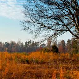 landscape photography tree scenic nature