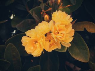 yellowflowers flowers plant