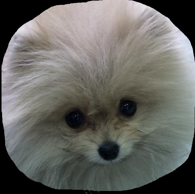 #dog #cute #ftestickers #eyes