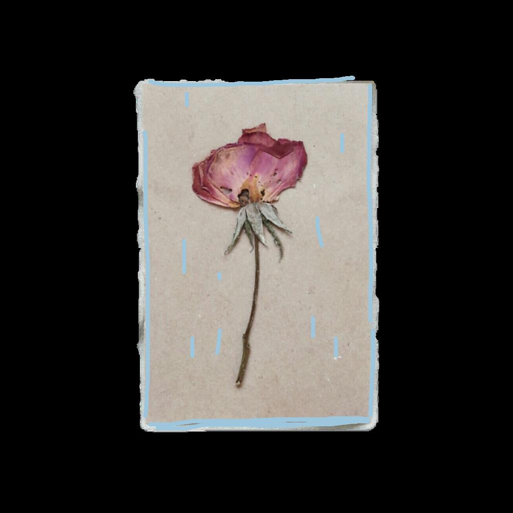 #FreeToEdit #ftestickers  #minimalism  #flower