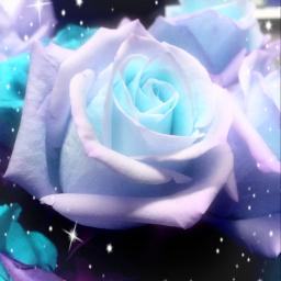 roses flowers editedbyme beautiful