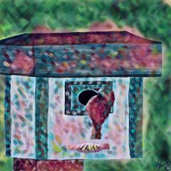 wdpbirdhouse birdhouse drawing draw colorful