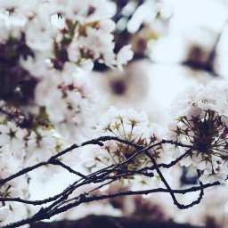 spring flowers nature quotesandsayings freetoedit