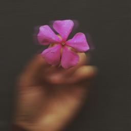 freetoedit lovenature flower love