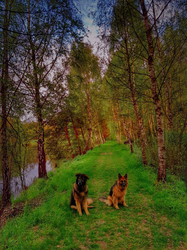 We wish all our Pa Friends and Fans a magical New Week  Big hug  #mylandscape #myphoto #mypet #mydog #germanshepherds