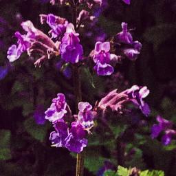 upcloseandpersonal gardenlife flowerportrait portraitsofcolor petalsandblooms