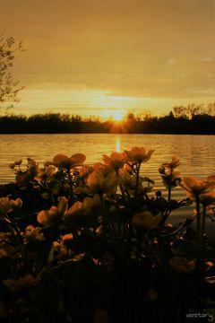 photography myphoto sunset plant naturephotography
